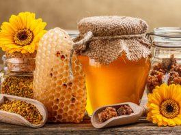 madu,propolis,lebah