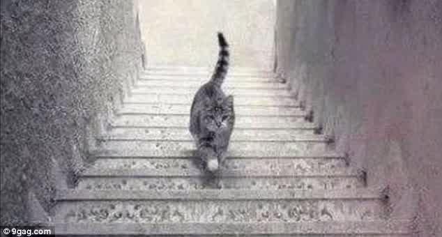Kucing ini naik atau turun? (gambar : 9gag)