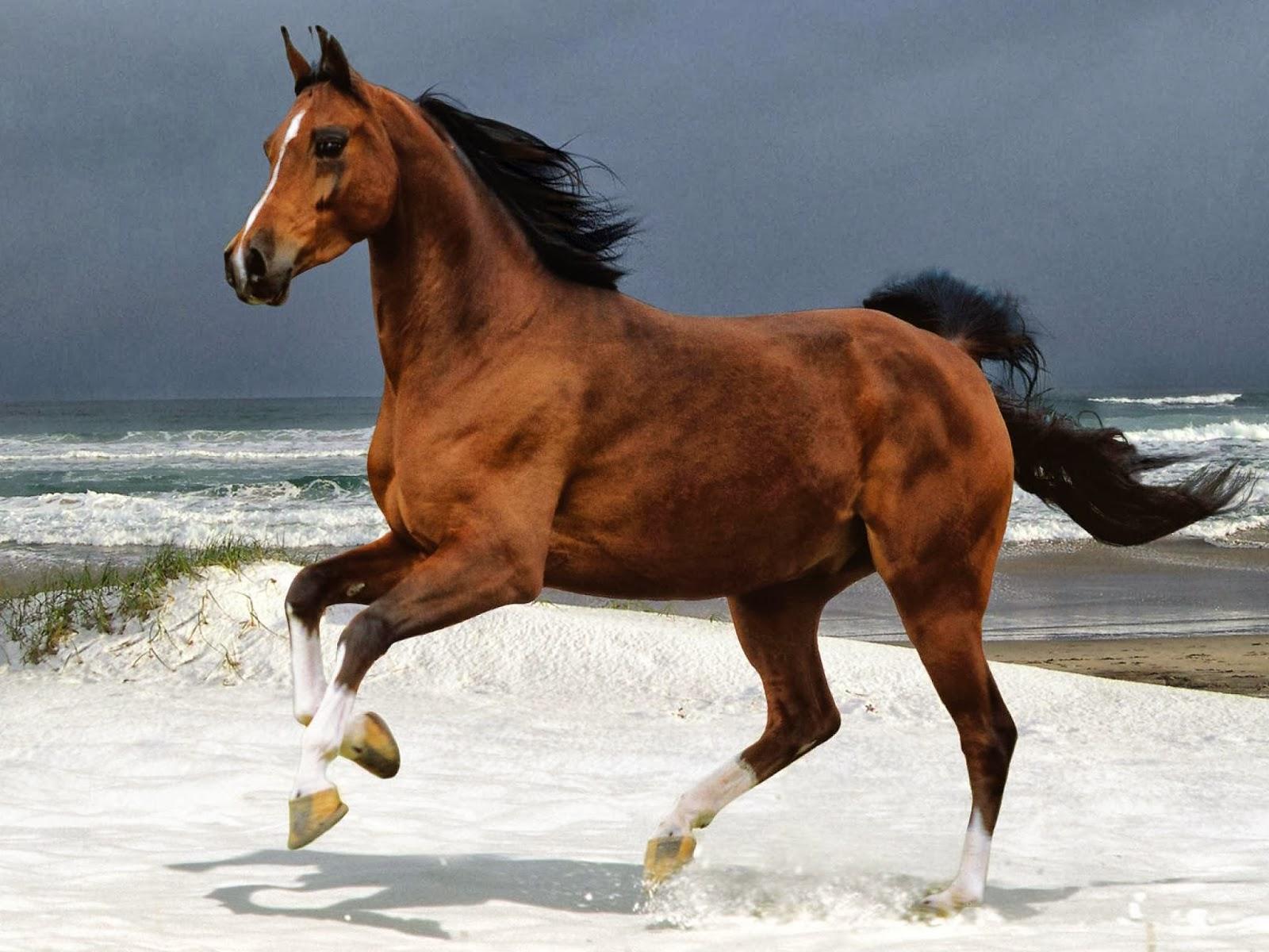 My Favorite Artis Kumpulan Gambar Kuda Putih Coklat Dan Hitam Keren