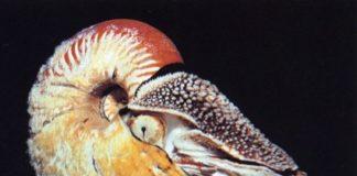 """""""Fosil Hidup"""" Terlangka di Dunia Muncul di Papua Nugini"""