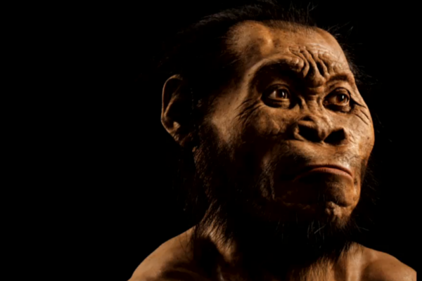 Kombinasi Modern dan Purba, Jenis Baru Manusia Ditemukan