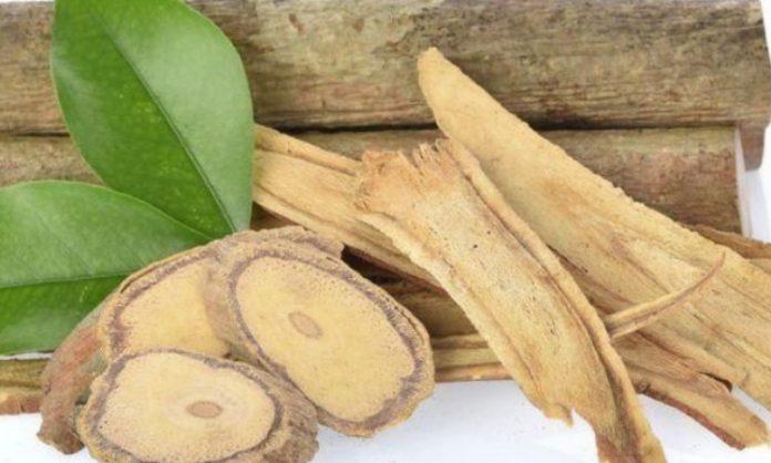 pasak bumi,obat kuat,obat kuat herbal,herbal